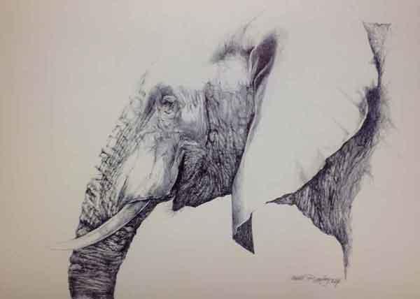 Elephant Drawing by Hettie Rowley