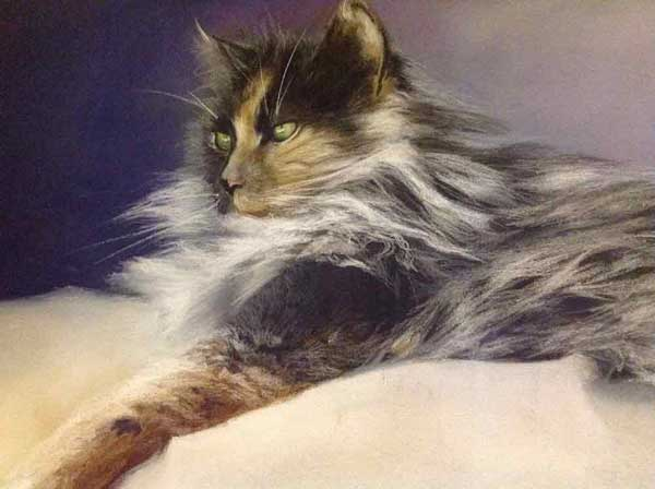 Our Lovely Rescued Cat, Narla
