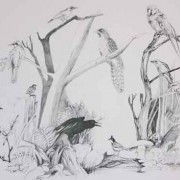 Birds in Forest - Illustration - pencil drawing