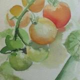 Joan Davis Tomatoes in Watercolor