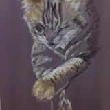 Pastels Pet Portrait by Anh Trieu