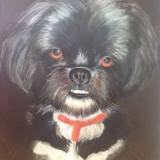 Dog by Vicki Packau