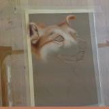 Dog sketch in Pastels by Jill Freeman