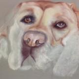 Dog in Pastels by Jill Freeman