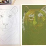 Tiger sketch in pencil and pastels by Anh Trieu