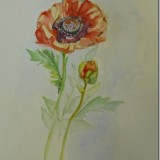 Poppies by Joan