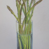 Asparagus in pencil and watercolour pencils