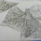 pencil drawing of decaying leaves