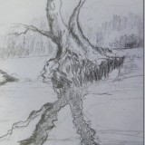 Exploring expressive line and tone in nature/ pencil