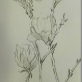 Exploring the sensitivity of pencil line work relating to natural form